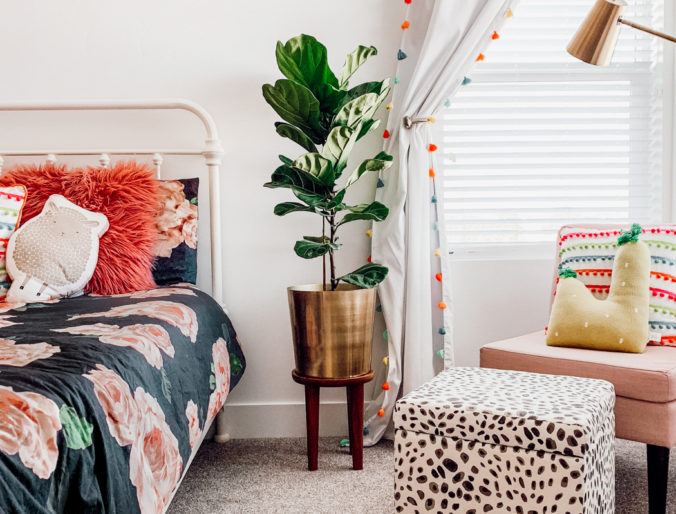 fiddle leaf fig tree styled and best cute gold post/ plus care tips and tricks for planting and buying a fiddle leaf fig tree